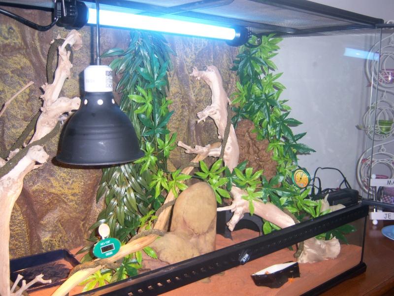 lampe pour terrarium pogona