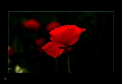 Note flamenco dans Mes mots sur les photos de Silence mai8ar13