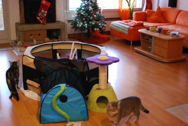 articles pour parc chaton ou nurserie page 5. Black Bedroom Furniture Sets. Home Design Ideas