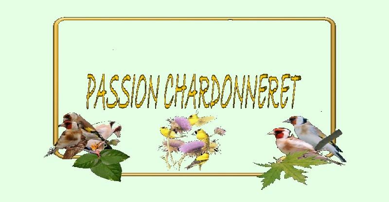 Passion chardonneret
