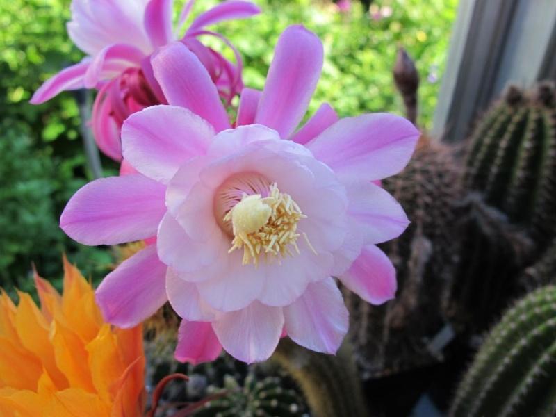 pink_n10.jpg