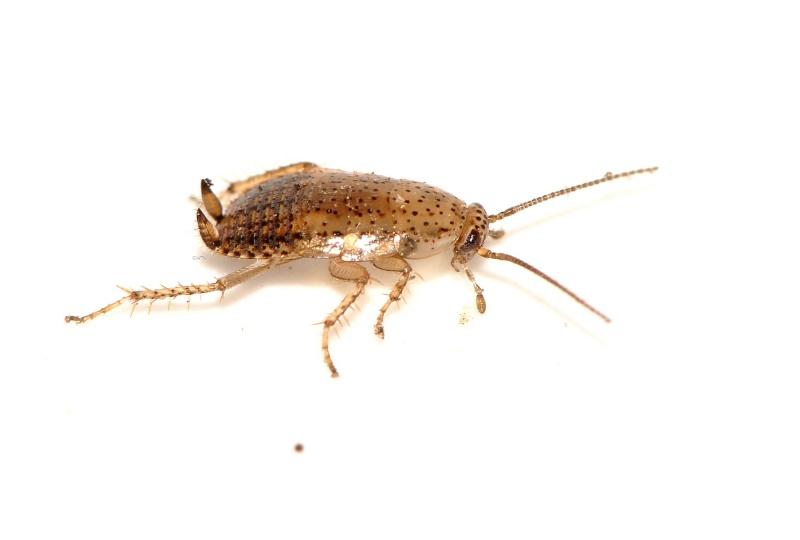 identification petit insecte dans mon insectarium 4 ou 5 m. Black Bedroom Furniture Sets. Home Design Ideas